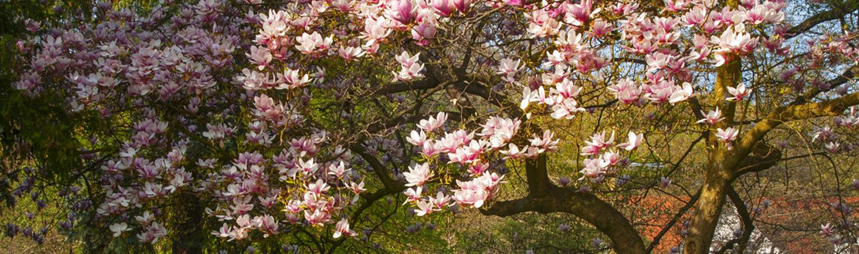 Welche Bäume eignen sich für Ihren Garten?