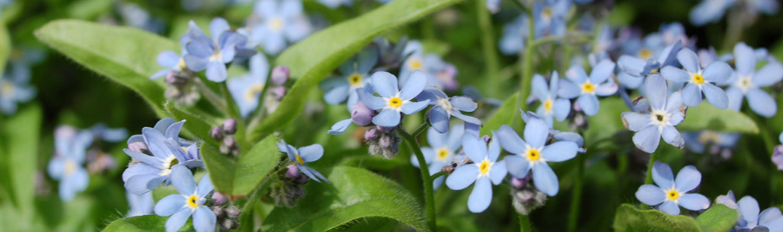 Blühende Gartenpflanzen