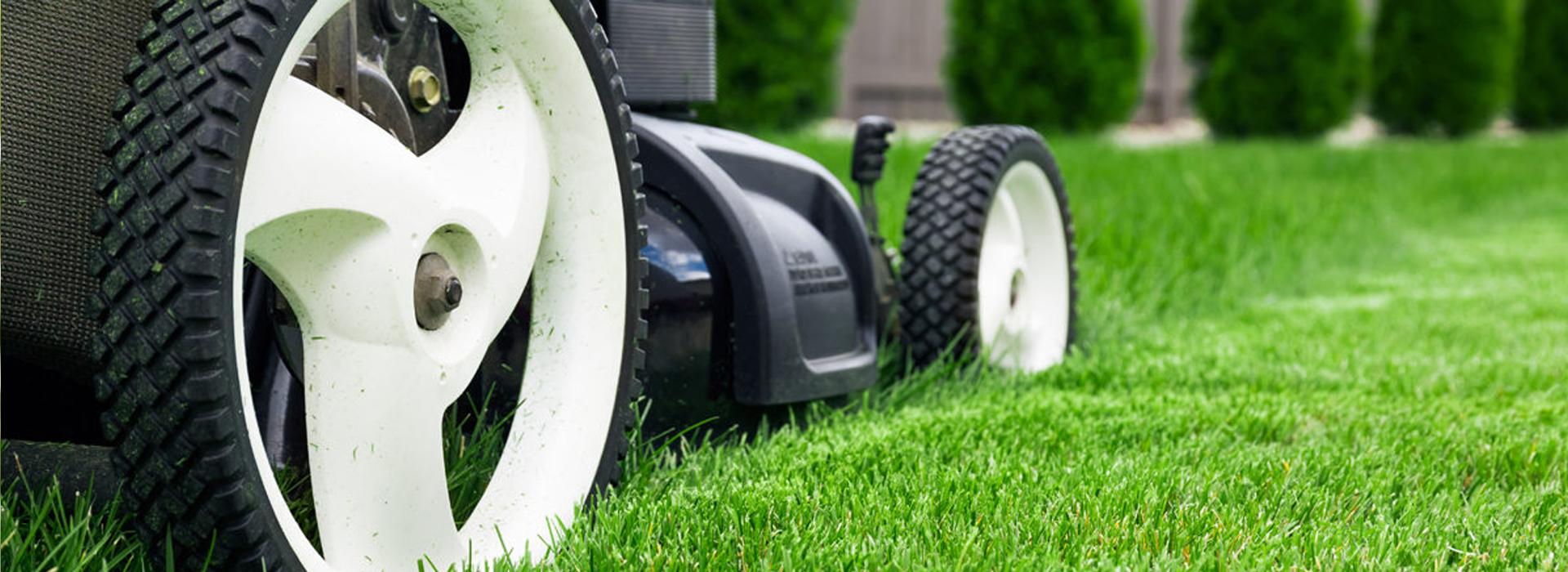 Wirkungsvolle Rasenpflege
