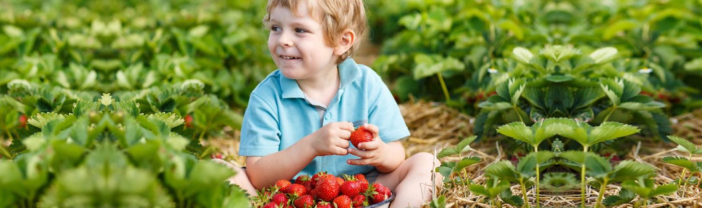 7 Wochen Erdbeer-Spaß
