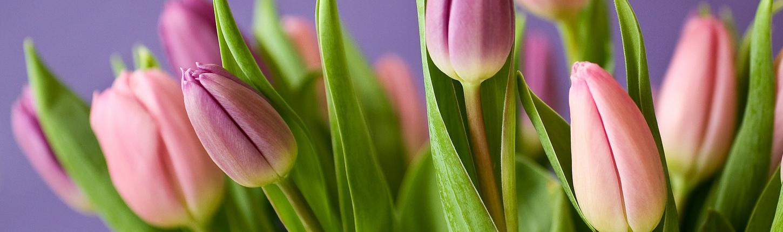 Frühlings-Blüher