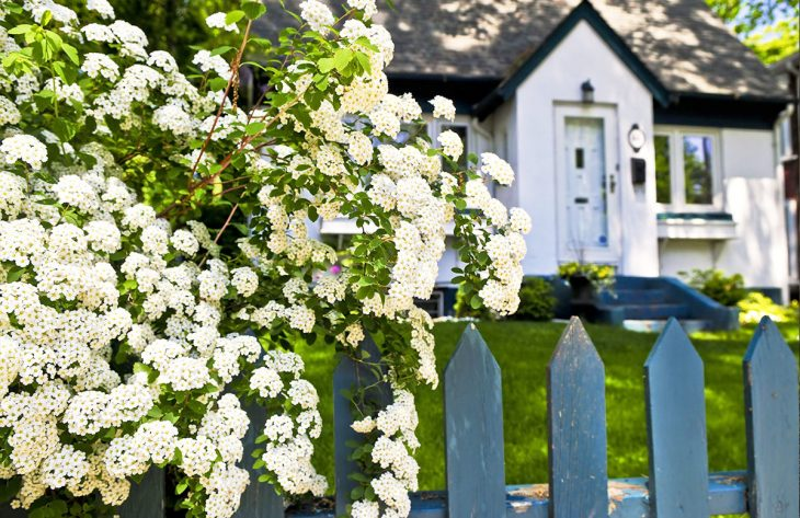 Gartenpflanzen Ratgeber